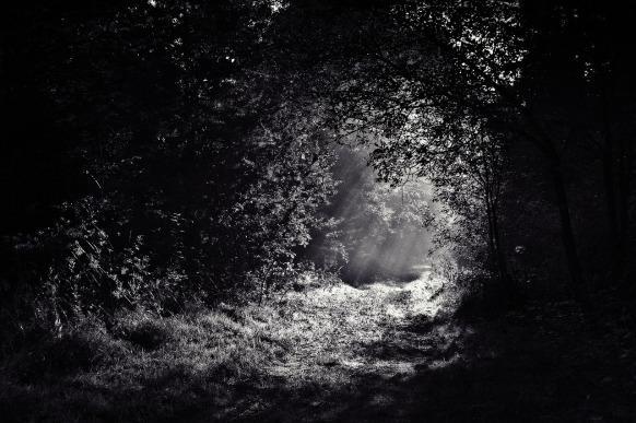 luzfrenteoscuridad